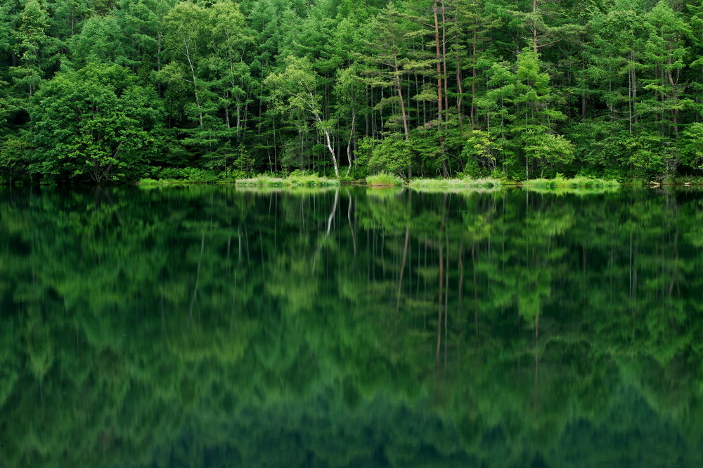 Photo in Random #forest #lake