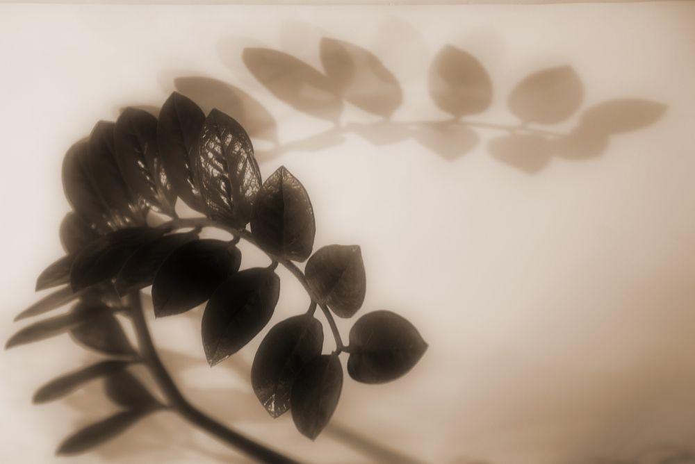 Photo in Random #тень #цветы #город