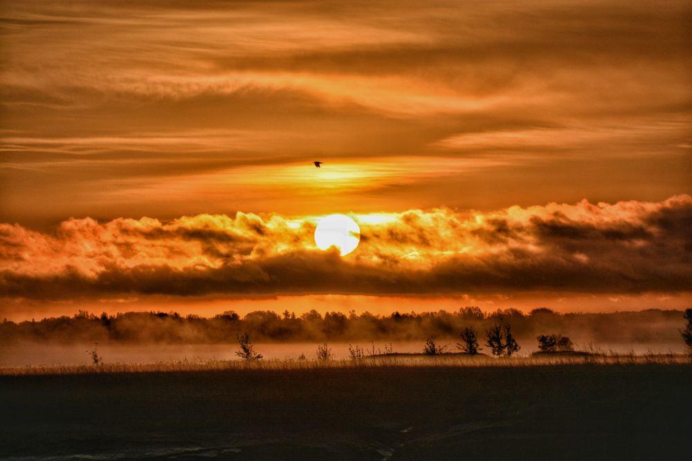 Photo in Landscape #sunrise #fog #nature