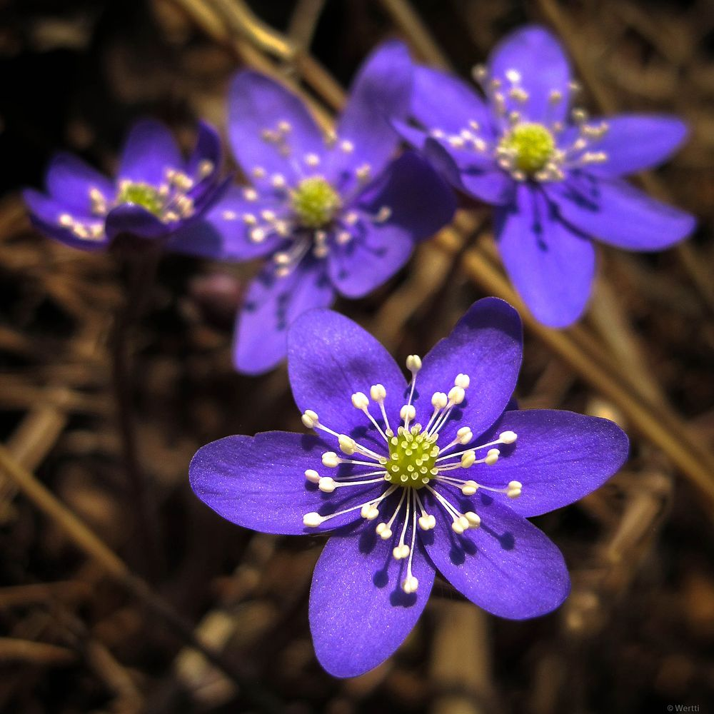 Photo in Nature #flower #spring #macro