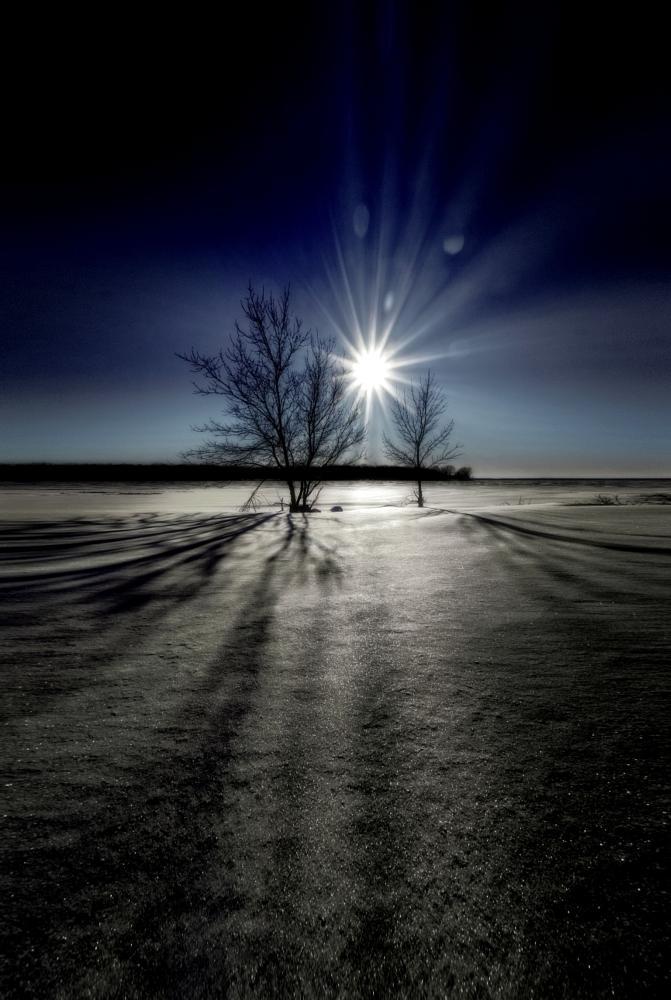 Photo in Random #winter #sun #tree #snow