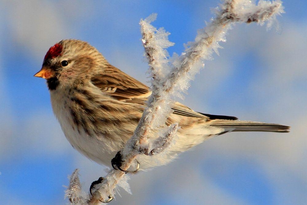 Photo in Nature #bird #nature #winter