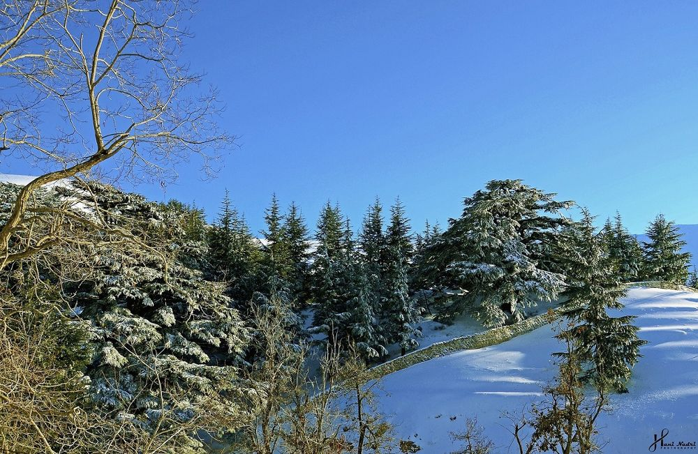 Photo in Landscape #landscapes #cedars