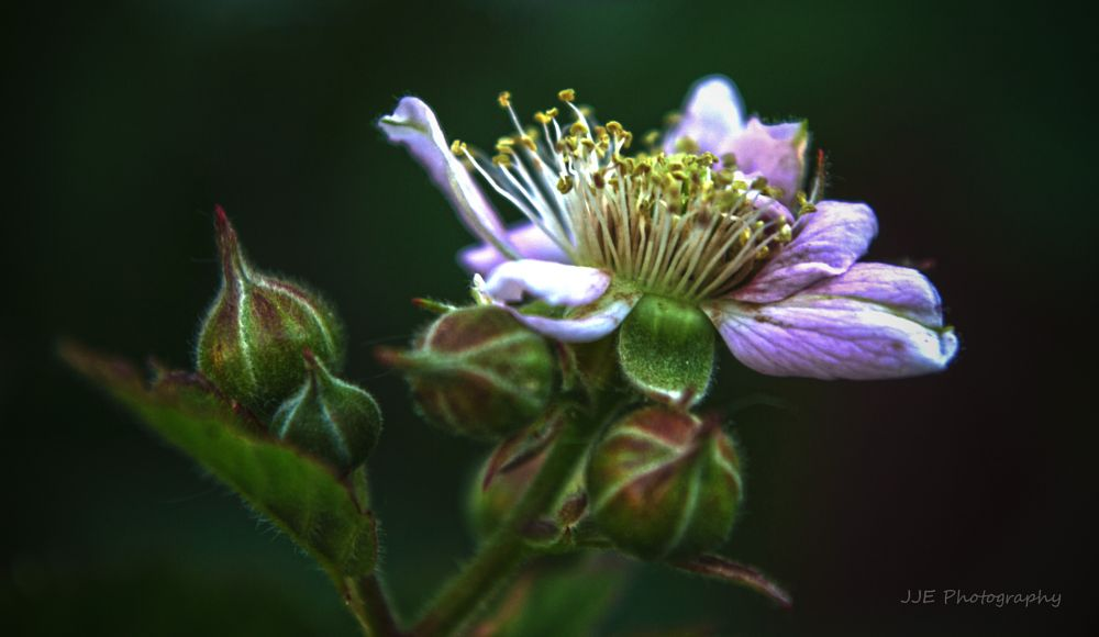 Photo in Nature #blossom #flower #hdr