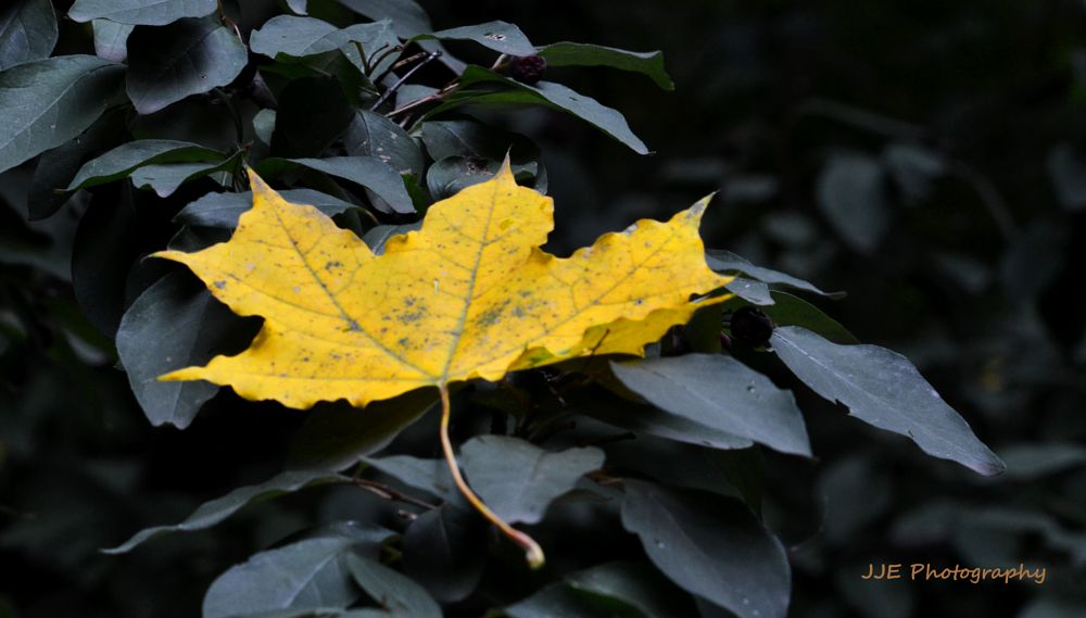 Photo in Nature #yellow #leaf #nature