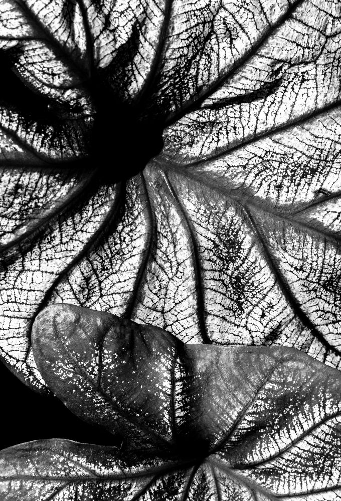 Photo in Nature #black and white #nature #abstract