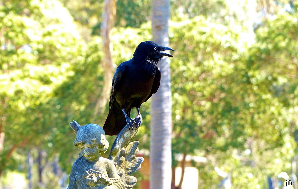 Photo in Nature #@raven crow bird