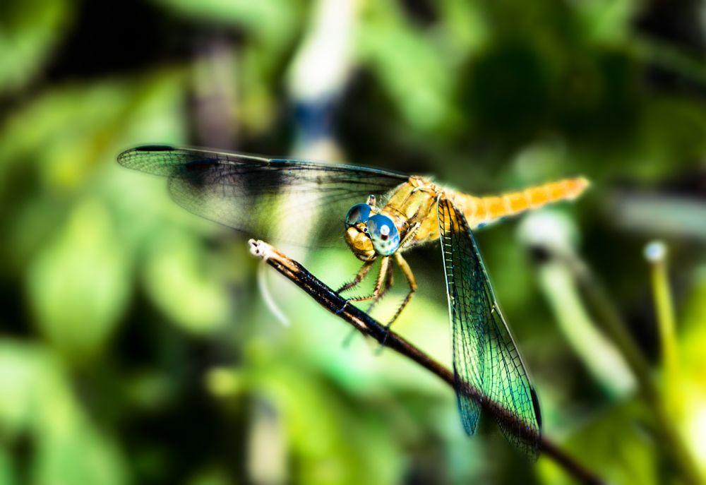Photo in Nature #artoftom #dragonfly #nature #summer