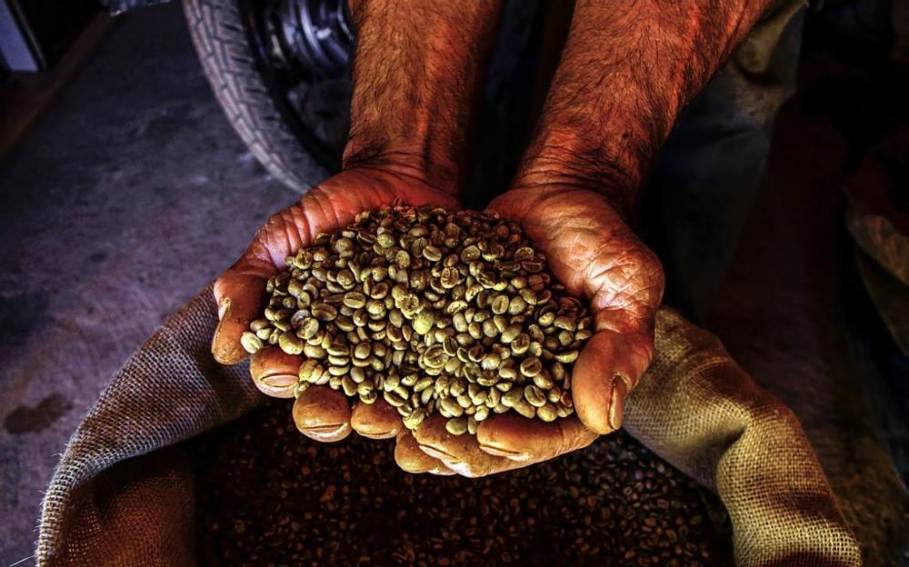 Photo in Travel #coffee #beans #hand #hands #brazil #farmer