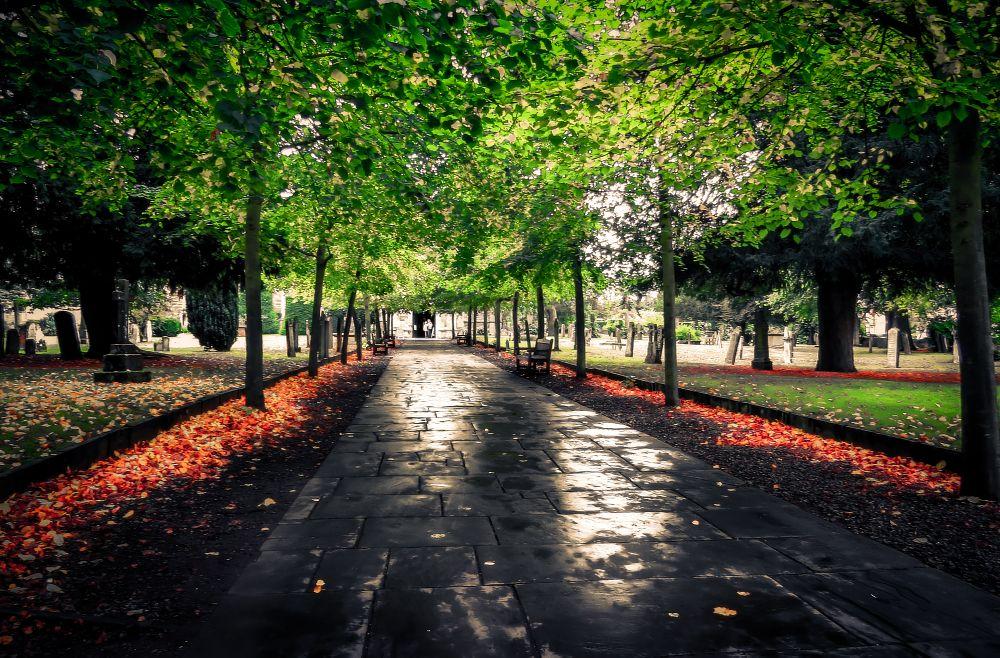 Photo in Random #holy #trinity #church #stratford-upon-avon #warwickshire #trees #leaves #graveyard #yard