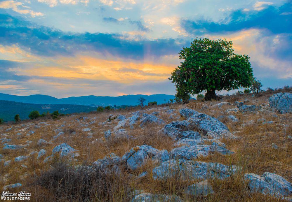 Photo in Nature #sun #sunrise #lebanon #nature #tree #rocks