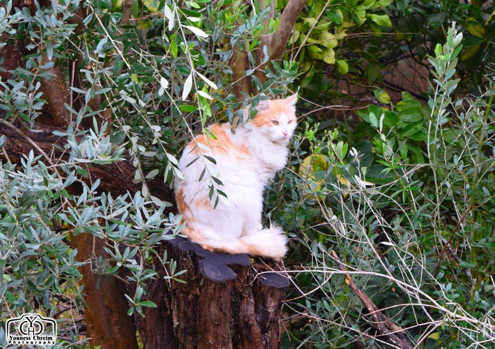 Photo in Animal #cat #nature #animal