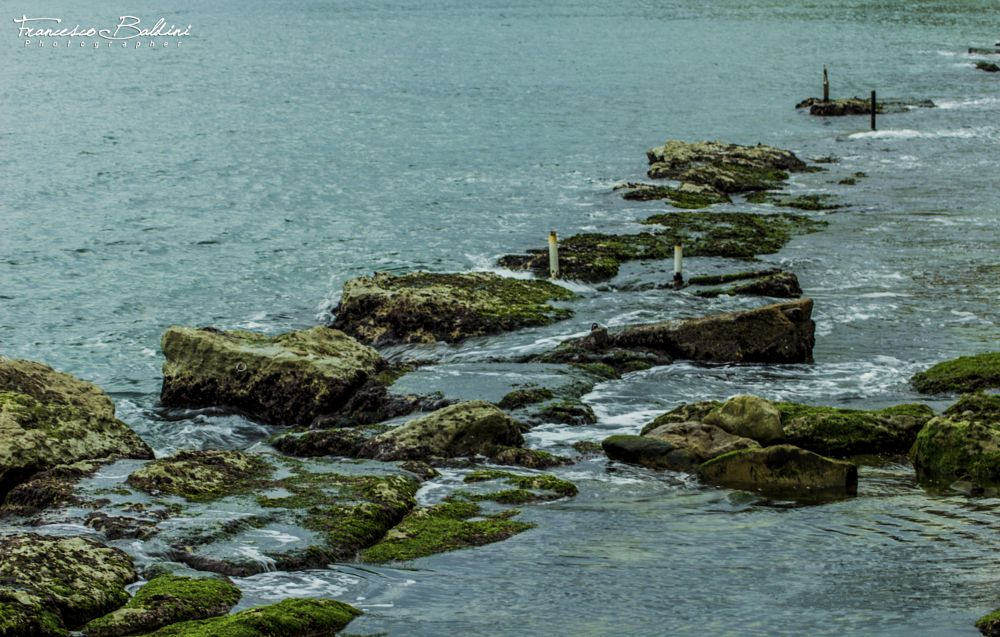 Photo in Nature #sea #stone #green
