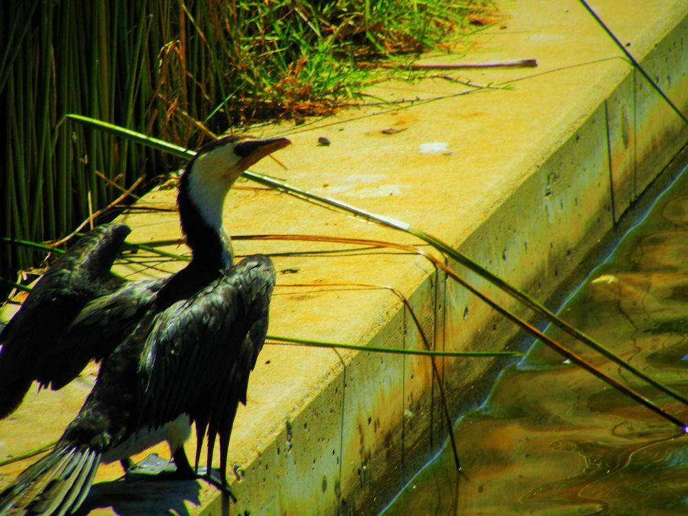 Photo in Animal #animal #bird #nature