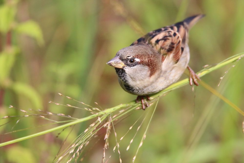 Photo in Animal #birdy time  to eat  eye  br