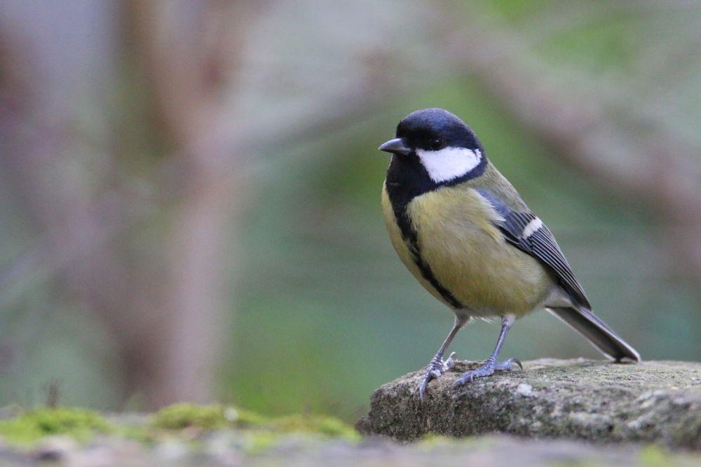 Photo in Animal #tit #free and wild #paris #nature #bird