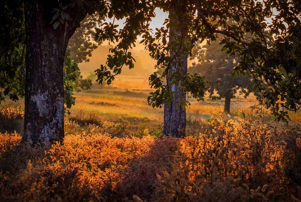 Photo in Landscape #landscape #sunset #trees