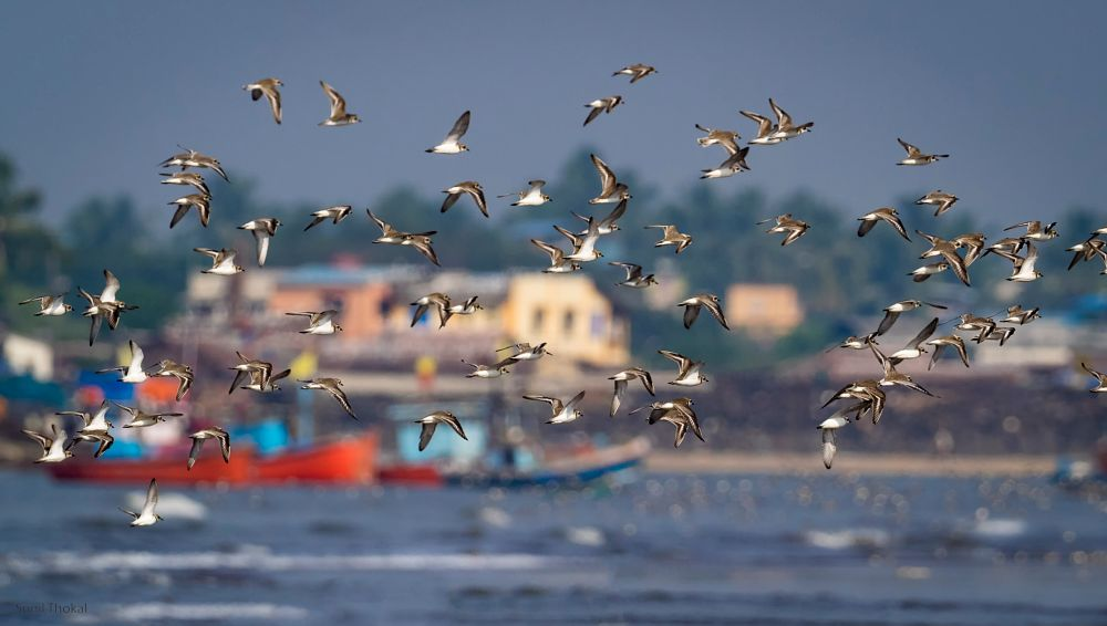 Photo in Animal #birds #flock #sea #boat
