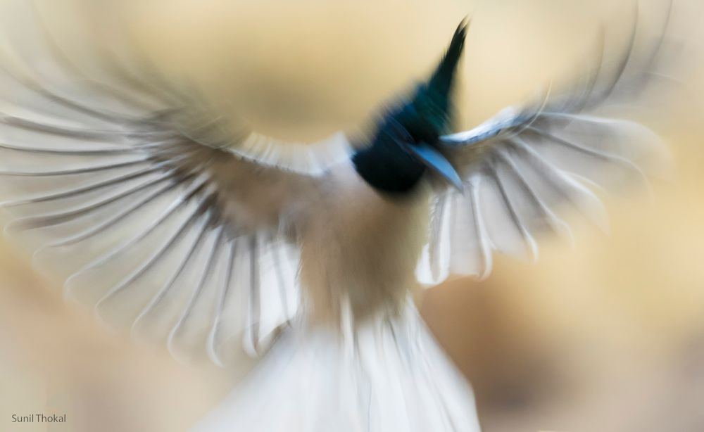 Photo in Abstract #motion #blur #bird