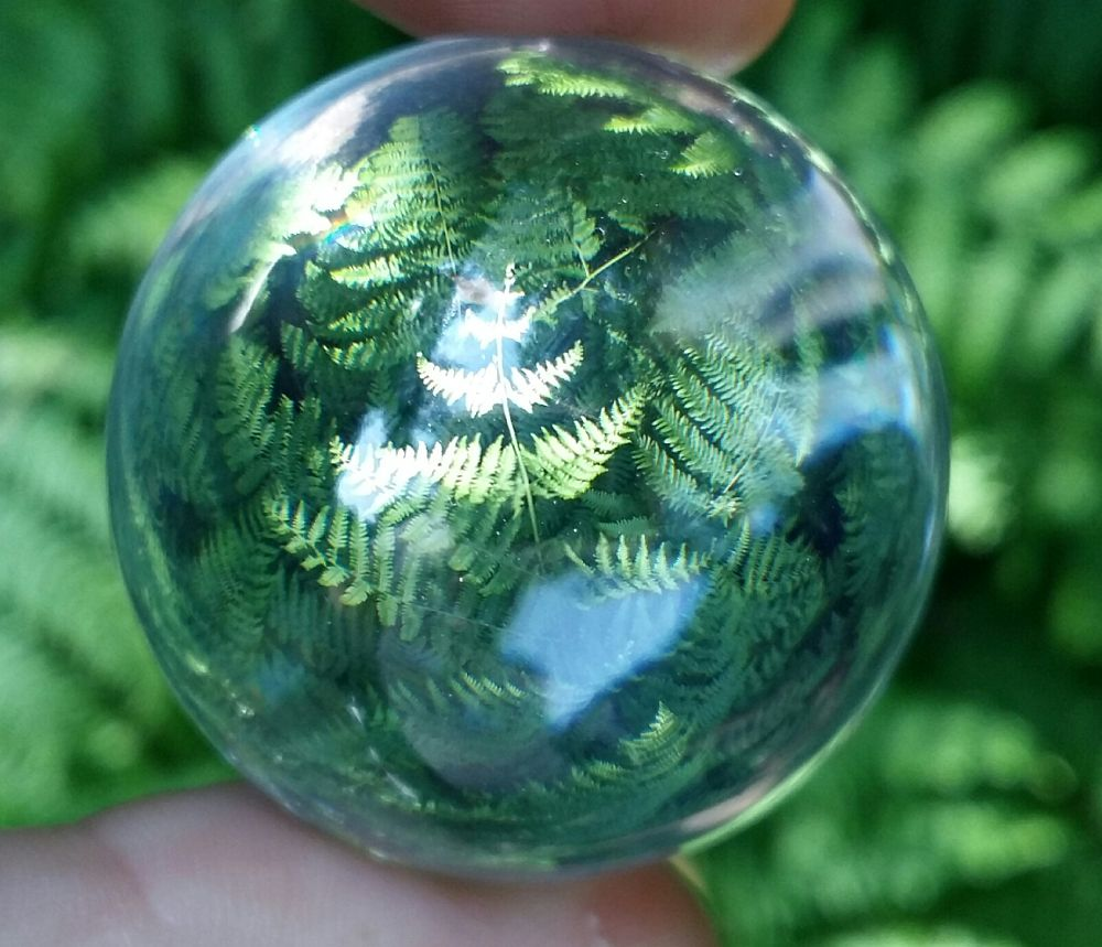 Photo in Nature #fern #refracted #green #nature