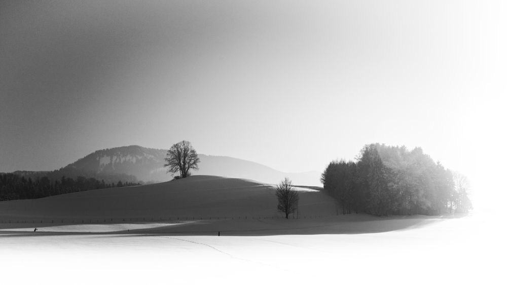 Photo in Black and White #sun #light #snow #koaxial #winter #2017 #landscape #nature #shadows #hills #trees #monochrome #black and white #schwarz-weiss