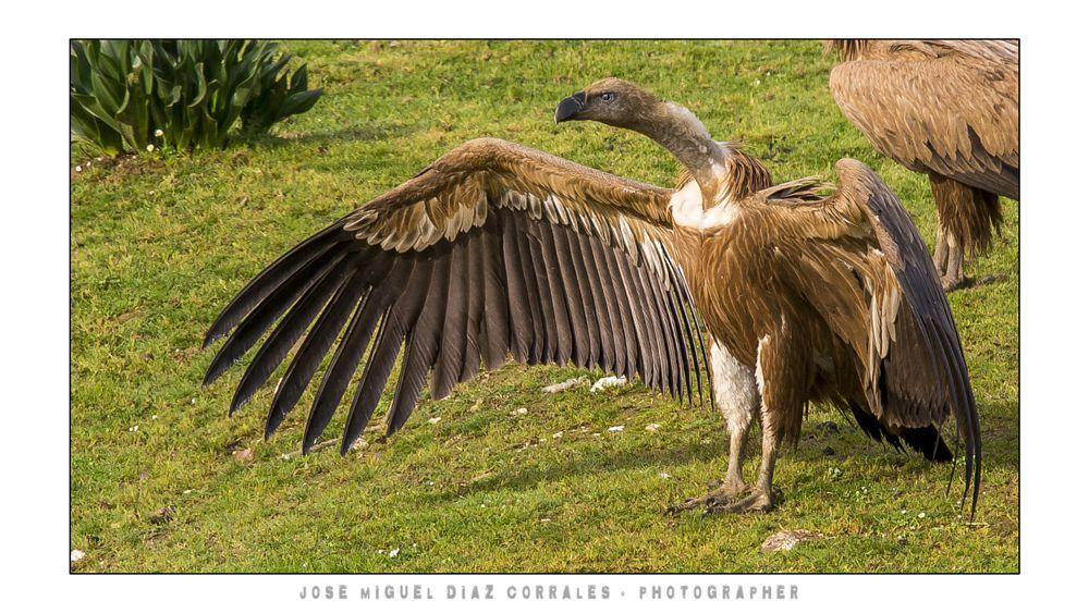 Photo in Animal #monfrague #trujillo #plasencia #caceres #extremadura #aves #birds #river #rio #tajo #spain #españa #nature #animal