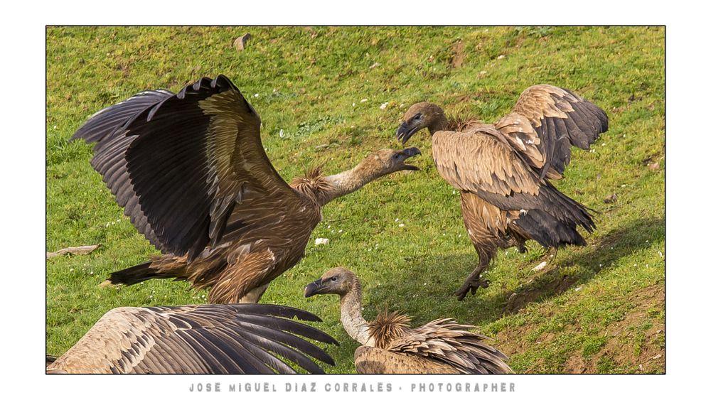 Photo in Animal #monfrague #caceres #spain #españa #trujillo #plasencia #river #rio #tajo #aves #birds #travel #viajes #nature #animal