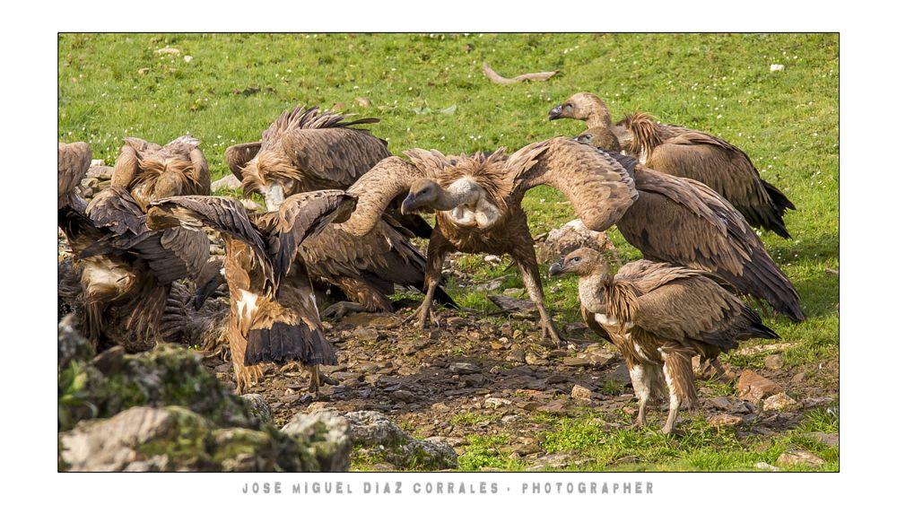 Photo in Animal #monfrague #caceres #trujillo #plasencia #patrimonio #rio #river #tajo #aves #birds #nature #animal #travel #turismo #viajes #spain #españa #extremadura