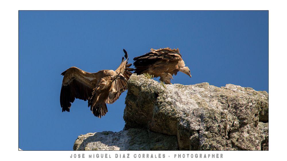 Photo in Animal #monfrague #vera #jerte #ambróz #gata #hurdes #villuercas #watter #agua #river #rio #lake #lago #mountain