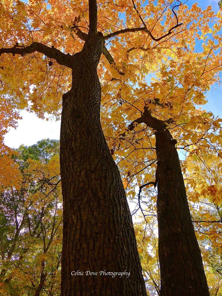 Photo in Nature #trees #nature #fall #random