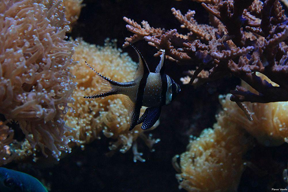 Photo in Animal #swim #fish #roks #nature #aquarium #miguel rubio #canon #eos #600d