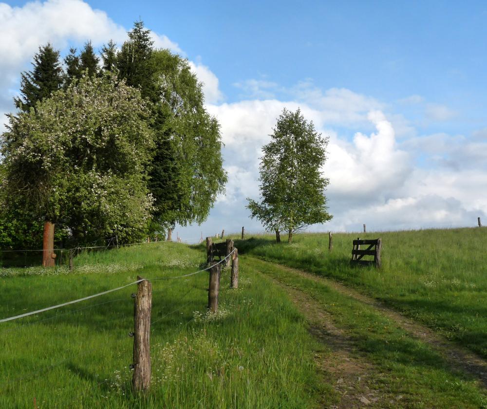 Photo in Landscape #hanaha #čr #škoda