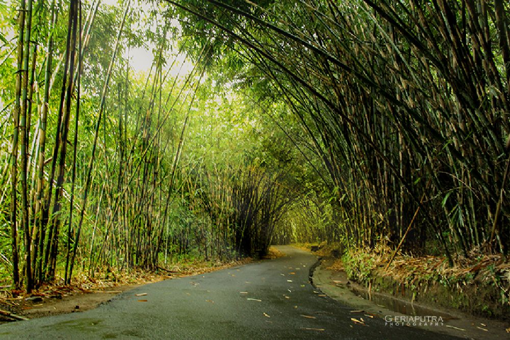 Photo in Landscape #landscape #afterrain #bambooforest