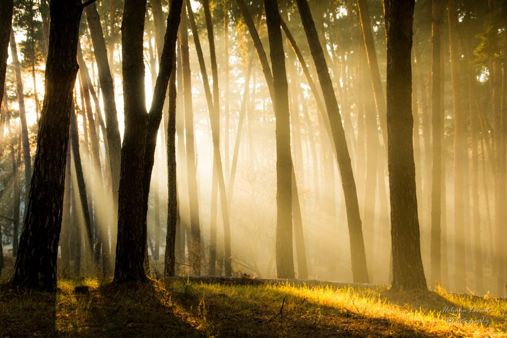 Photo in Landscape #sunshine #mystery #forest #late