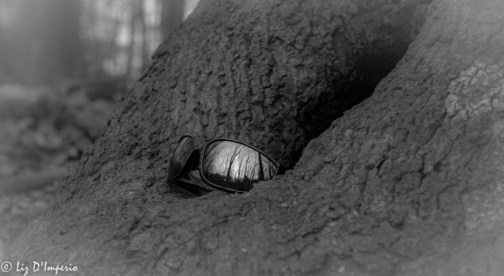 Photo in Random #black and white #trees #vignetting #hiking #forest #serene