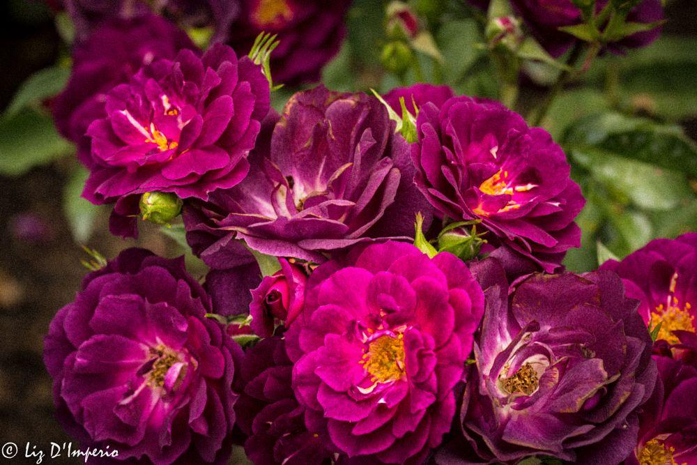 Photo in Random #flowers #gardens #color #nyc