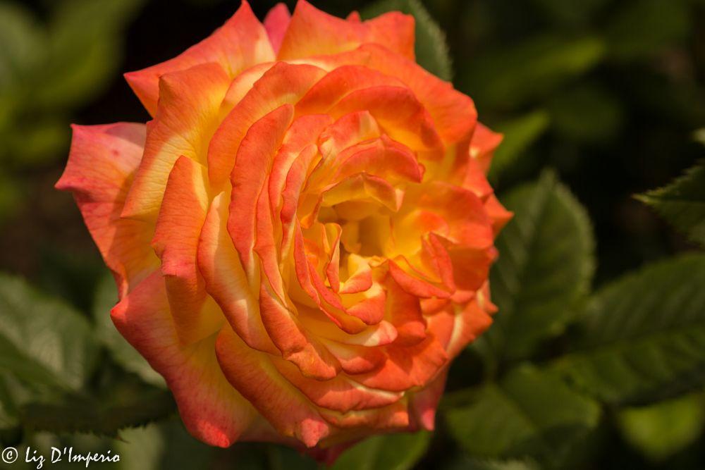 Photo in Random #flowers #spring #macro #colors #botanical gardens #nyc