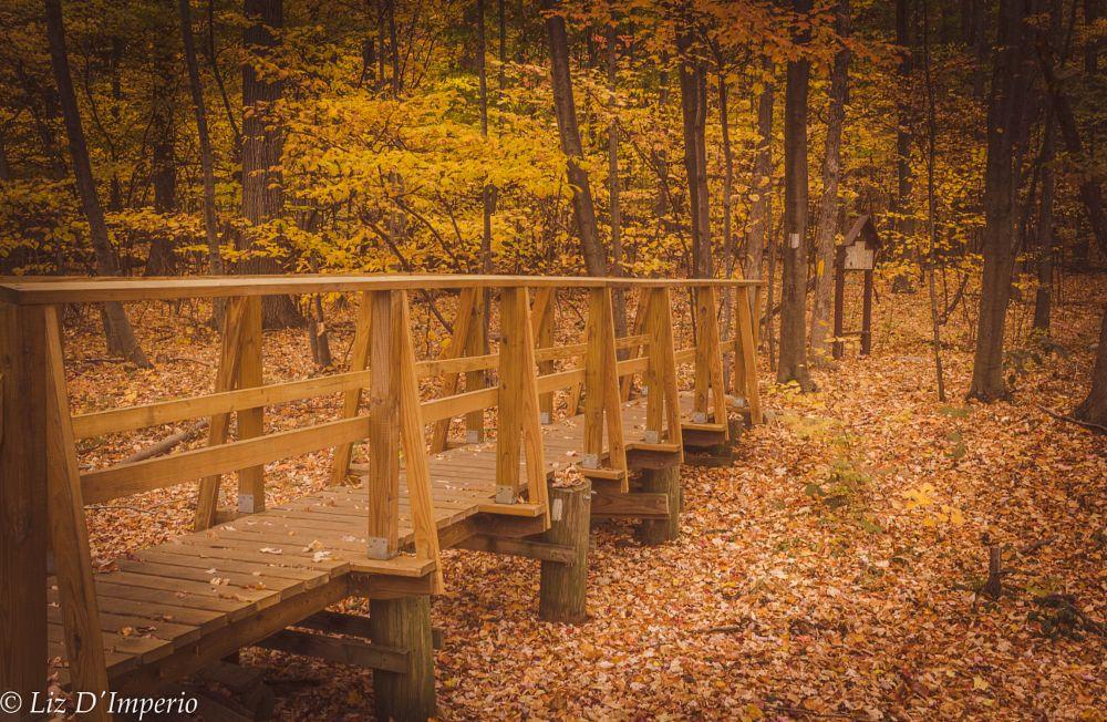 Photo in Random #fall #hiking #apalachian trail #new york #woods #serene
