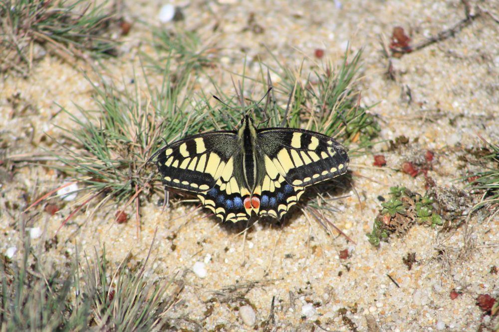 Photo in Animal #butterflies