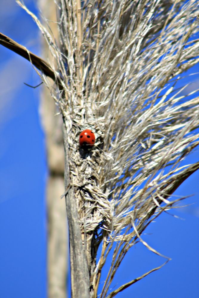 Photo in Nature #ladybugs #insects