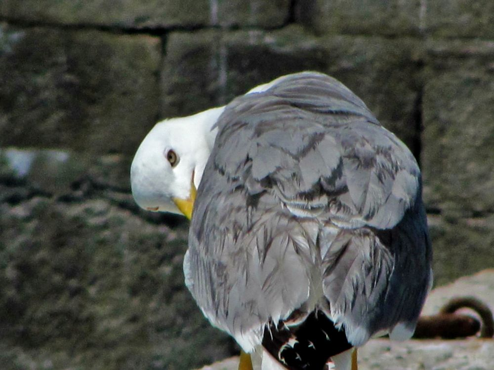 Photo in Animal #birds seagulls