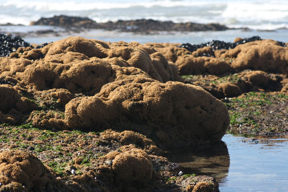 Photo in Sea and Sand #corals