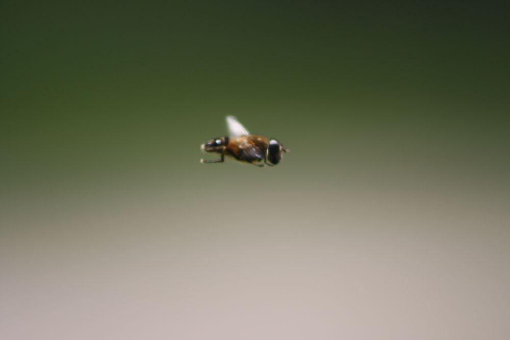 Photo in Animal #bees