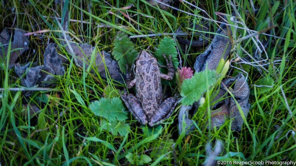 Photo in Nature #frog #animal #wildlife #nature #wild #outdoors