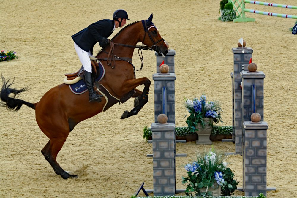Photo in Sports #show jumping #horse