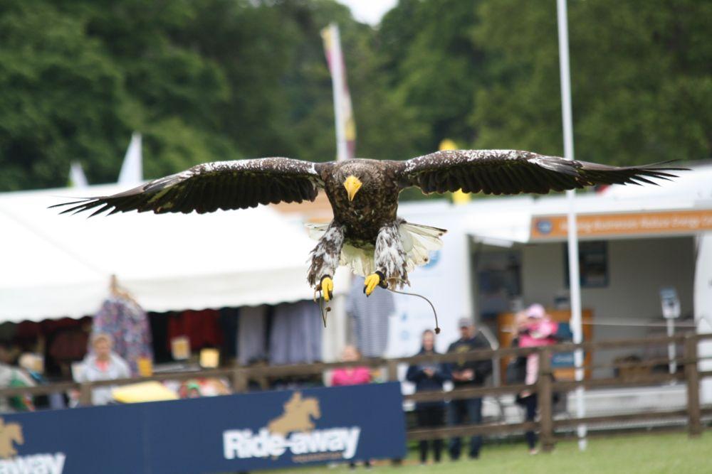 Photo in Animal #bird #eagle