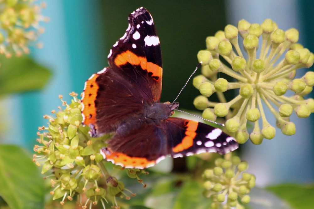 Photo in Nature #butterfly #macro