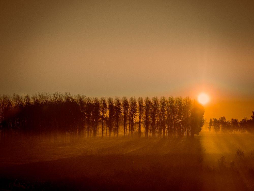 Photo in Landscape #forest #trees #sun #sunset #sunrise #landscape
