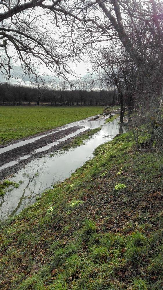 Photo in Landscape #sentier #eau #pluie #chemin #ciel #couvert