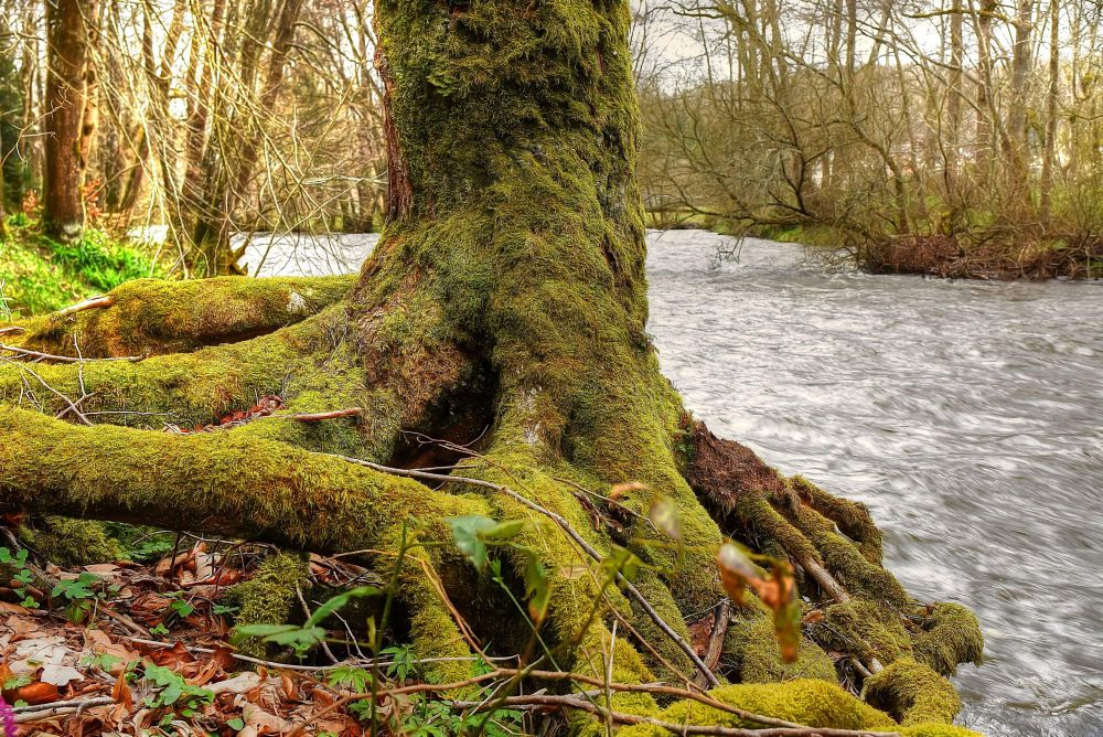 Photo in Nature #trees #moss #sioulet #auvergne